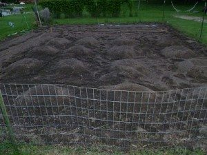 Fencing is an option to keep deer and other critters our of your vegetables.