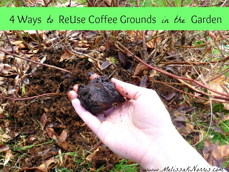 Perfect 4 Tips To ReUse Coffee Grounds In The Garden @MelissaKNorris