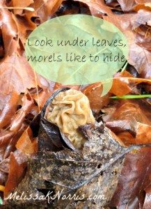 Morels like to hide, look under leaves @MelissaKNorris