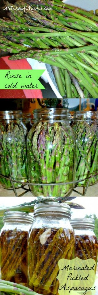 How to Make and Can Marinated Pickled Asparagus www.melissaknorris.com Pioneering Today