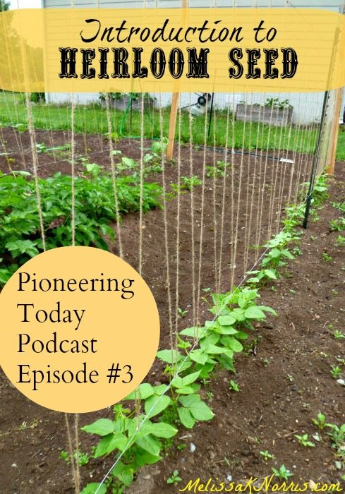 Intro to Heirloom Seeds Pioneering Today Podcast #3 www.melissaknorris.com