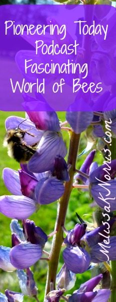Learn about Bees and how our food supply depends on them www.melissaknorris.com Pioneering Today