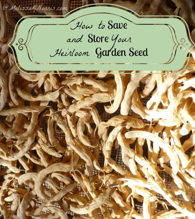 How to Save and Store Heirloom Garden Seed www.melissaknorris.com