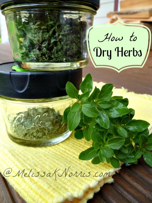 How to Dry Herbs www.melissaknorris.com Pioneering Today
