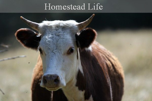Learn the aspects of modern homesteading at MelissaKNorris.com