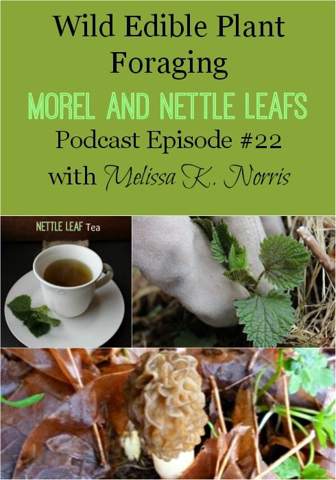 Wild Edibles Spring Foraging for morel mushrooms and nettle leaf Pioneering Today podcast with Melissa K. Norris Learn how to forage for free food, becoming more self-sustainable. Tips on safety, where to find wild edibles, and health benefits.