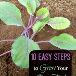 10 Easy Steps to Grow Your Own Food