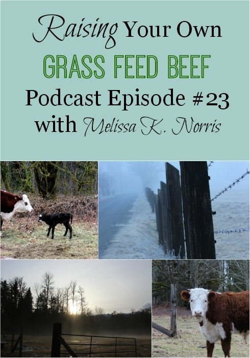 Raising Your Own Grass Fed Beef Podcast episode #23 Learn how to get started raising your own grass fed beef, tips, amount of pasture per animal, and how to raise beef without your own property.