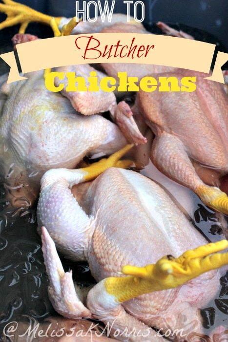 "5 butchered chickens sitting in ice water with text overlay, ""How to Butcher Chickens""."