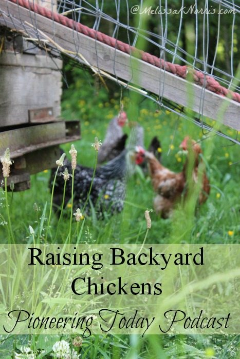 Raising backyard chickens. Love the tips on what to expect, pros and cons of free range chickens, and reasons to buy laying hens. Let's start a raising your own food revolution!