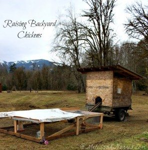 Repurposed chicken tractor and coop. Learn how to raise backyard chickens