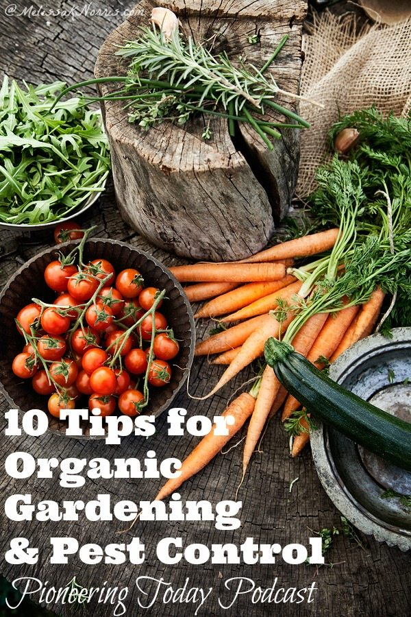 Episode 32 10 Tips for Organic Gardening and Pest Control