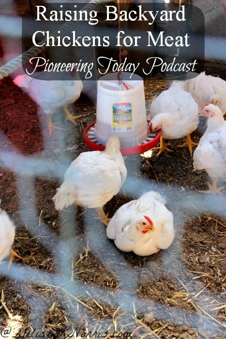 Podcast Episode #30 Raising Backyard Chickens Meat Birds ...