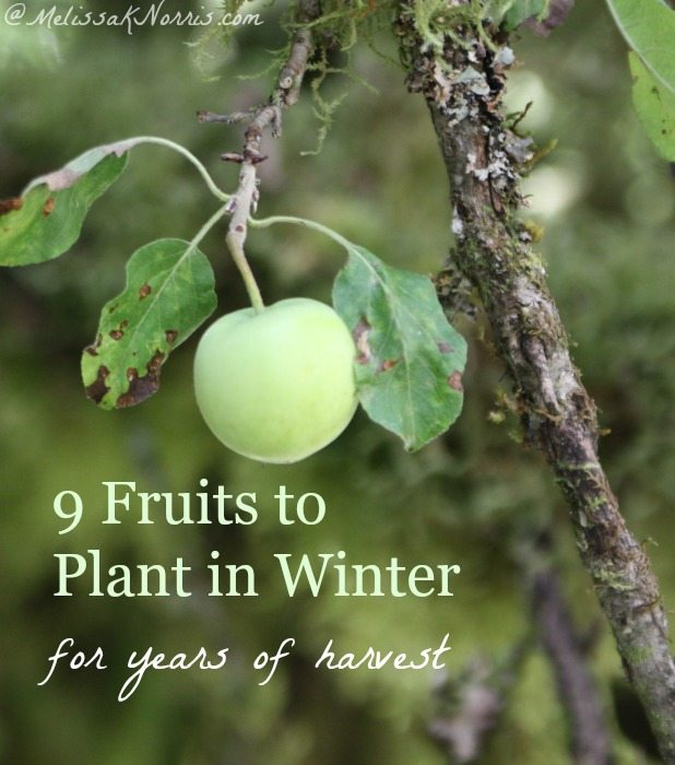 Eager To Start Gardening But Still In Winter These 9 Fruits Are Planted