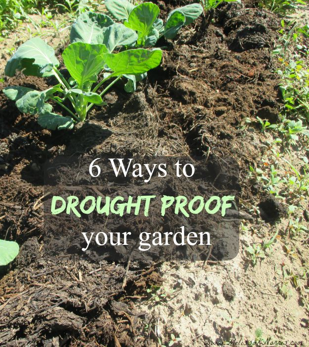 Worried about your plants in the hot summer months or during a water shortage? Learn how to use these 6 easy tips to drought proof your garden.