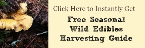 Free Seasonal Wild Edibles Harvesting Guide