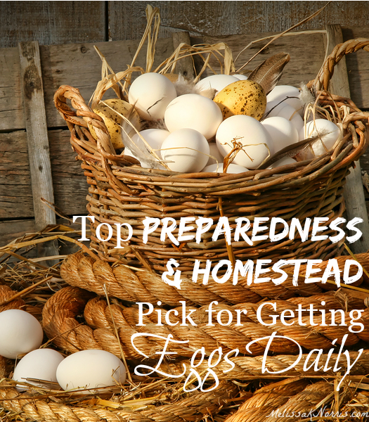 I can't believe I never knew this before. This is the top pick for preparedness and homesteaders pick for getting eggs daily. I think bakers can be added to that as well!