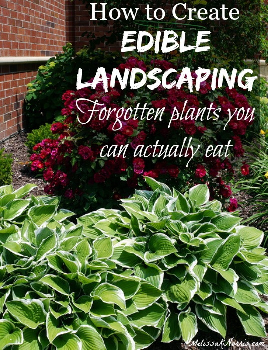 Learn how to create edible landscaping so your home not only looks beautiful, but also saves you money by growing groceries outside your front door. I loved learning about some of the landscape plants that are actually edibles but most people don't recognize or know about. I had no idea hostas were edible!