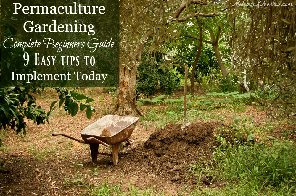 Permaculture gardening for beginners fasci garden for Gardening for beginners