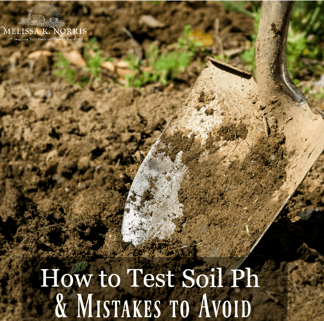How to test soil PH and amend acidic soil
