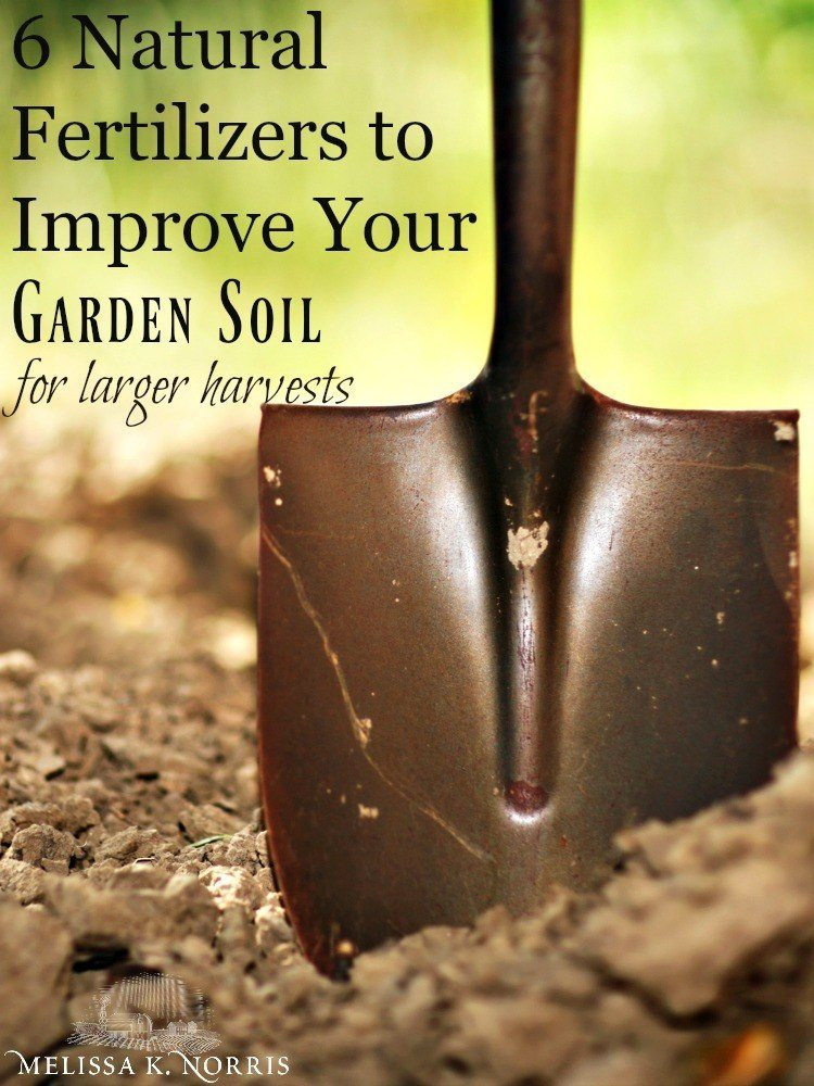 natural fertilizers to improve your garden soil
