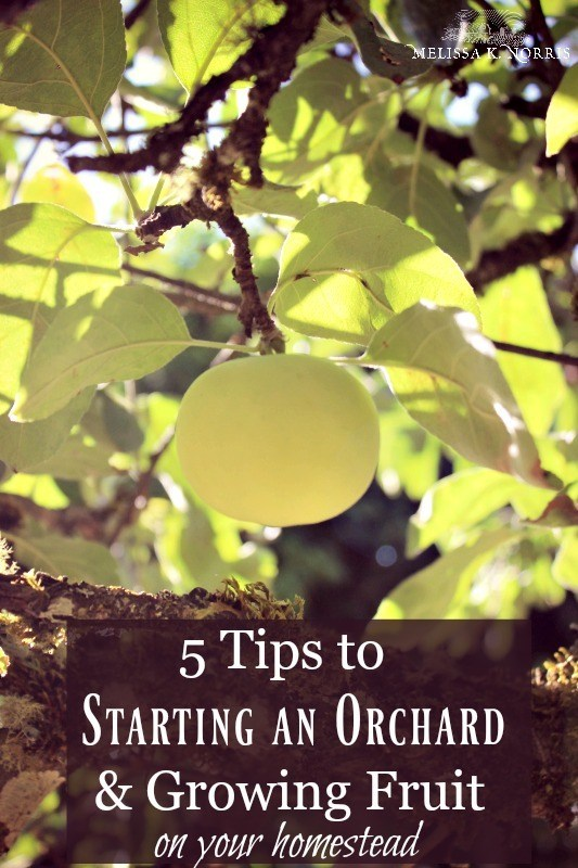 starting an orchard
