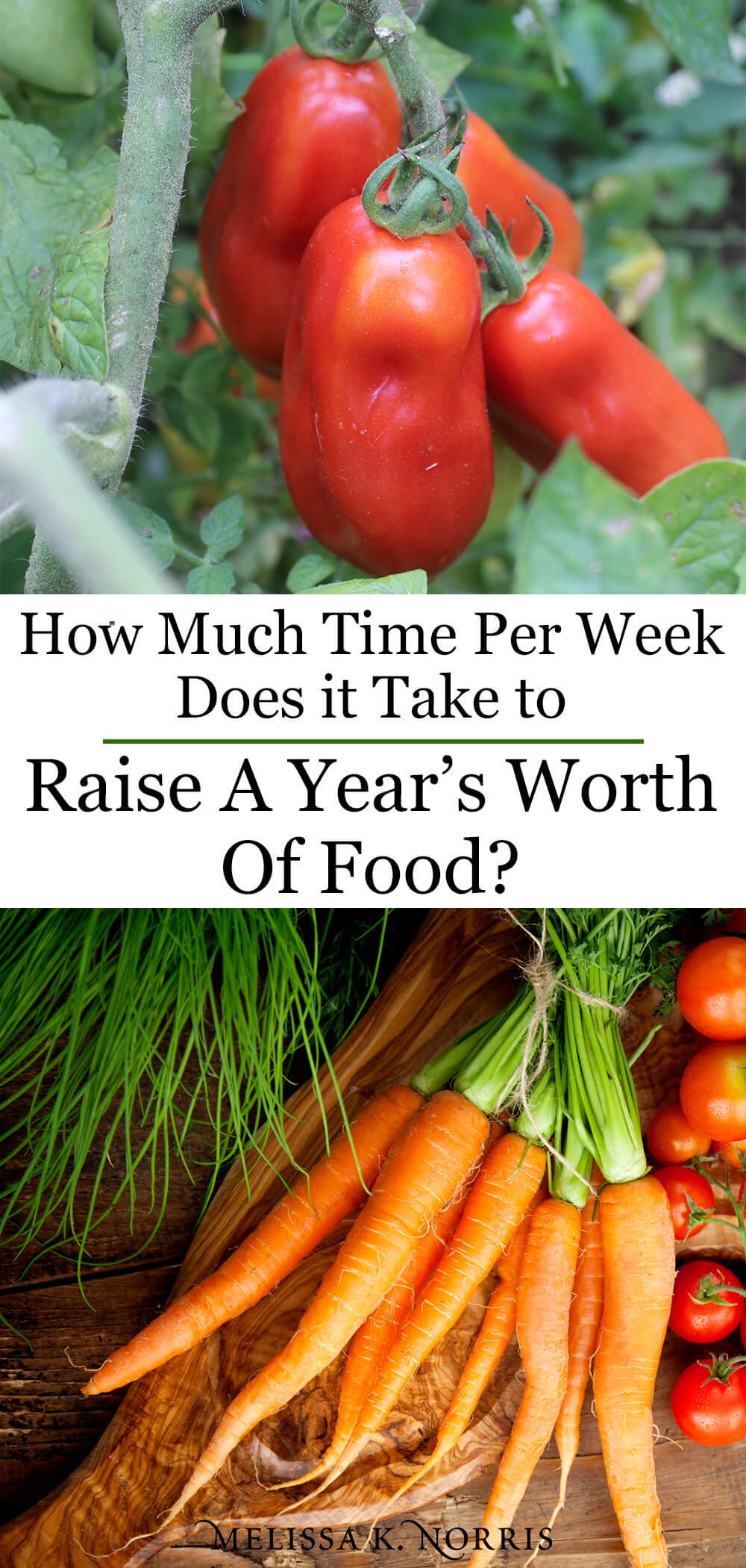 Raise a Year's Worth of Food Pioneering Today Podcast Vine ripened heirloom tomatoes fresh carrots on a modern homestead