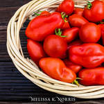 basket of ripe heirlom tomatoes