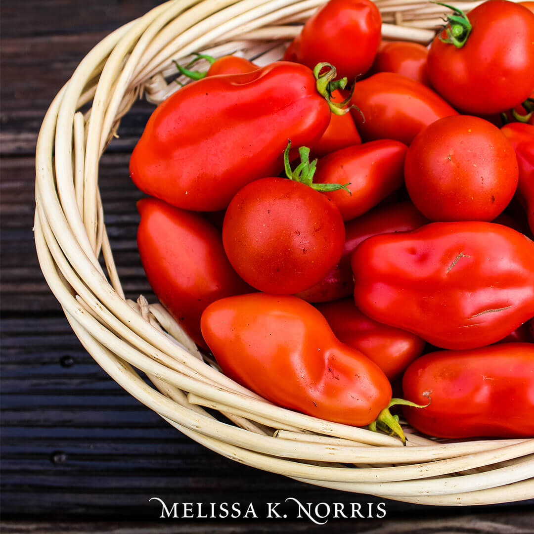 Soil For Tomatoes: Tomato Growing Secrets For A