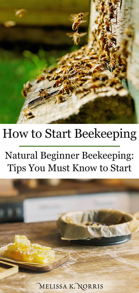 backyard beekeeping for beginners, honey comb on table, bees entering hive