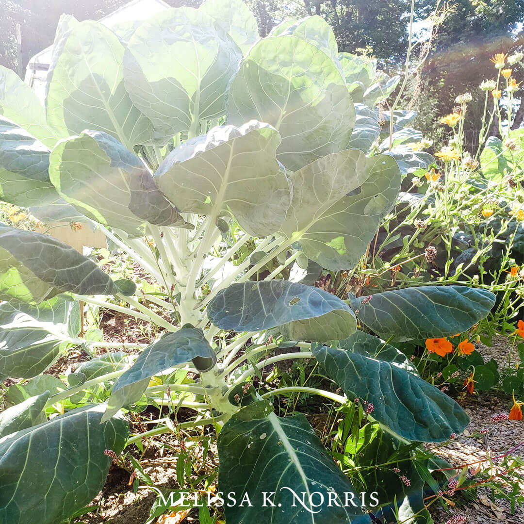 What To Plant Now For Fall Garden Crops