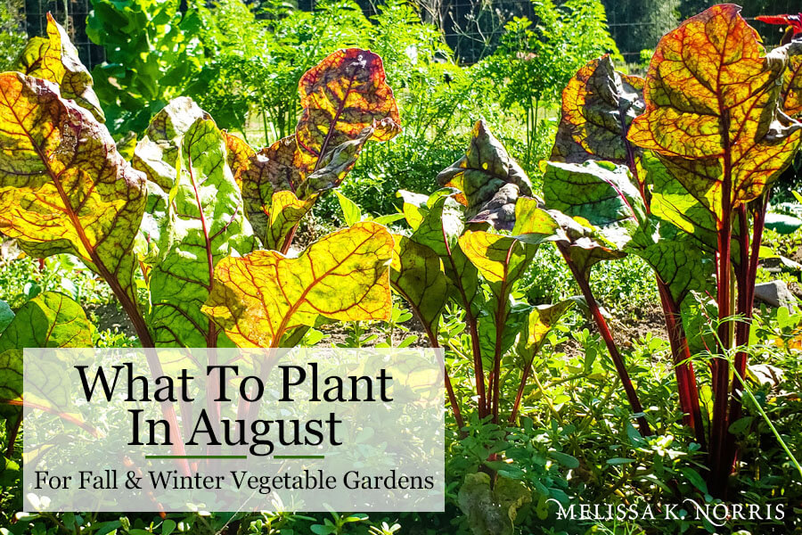 What to Plant in August for Fall Garden Crops