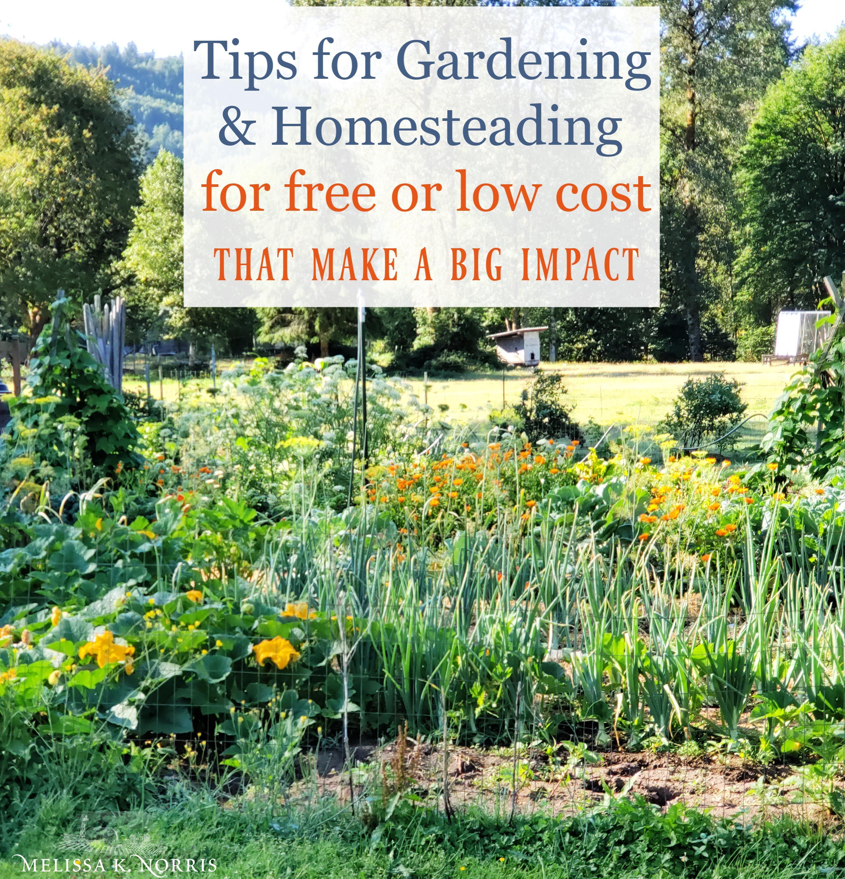 Cheap Gardening Ideas: Cheap Garden Ideas For Your Homestead That Make A Big Impact