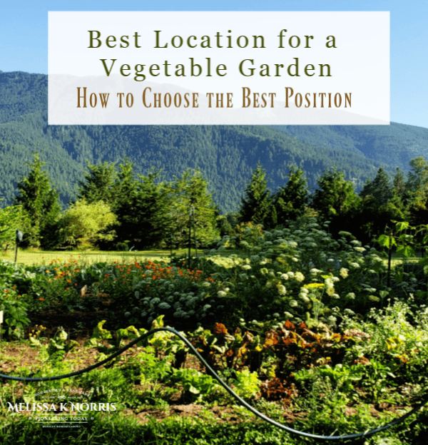Best location for a vegetable garden