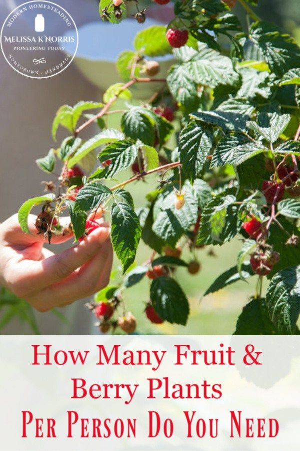 How many fruit & berry plants per person do you need