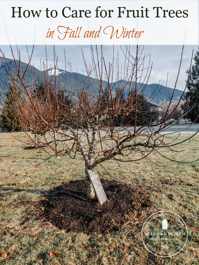 how to care for fruit trees in fall and winter apple tree in winter