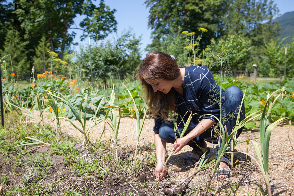 A woman crouching in the garden pulling up a head of garlic.