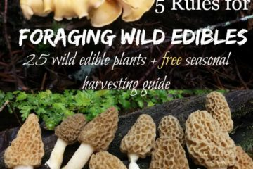 """Two images of wild mushrooms with text overlay that says, """"5 Rules for Foraging Wild Edibles: 25 wild edible plants + free seasonal harvesting guide""""."""