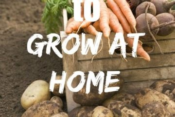 "Image of potatoes, carrots and other veggies fresh out of the garden. Text overlay says, ""7 Foods to Grow at Home""."