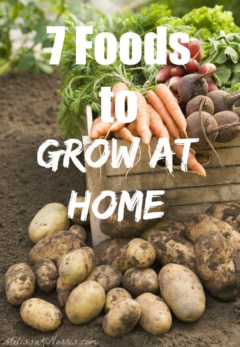 """Image of potatoes, carrots and other veggies fresh out of the garden. Text overlay says, """"7 Foods to Grow at Home""""."""