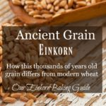 """Image of einkorn grain on an old table with text overlay, """"Ancient Grain Einkorn""""."""