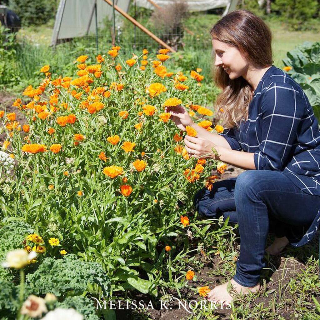 A woman kneeling in the garden next to a crop of calendula.