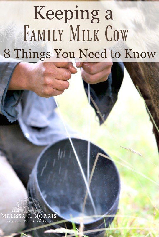 """Close up of hands milking a cow. Text overlay says """"Keeping a Family Milk Cow, 8 Things You Need to Know"""""""