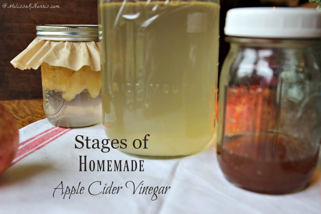 Three jars showing the different stages of homemade apple cider vinegar.