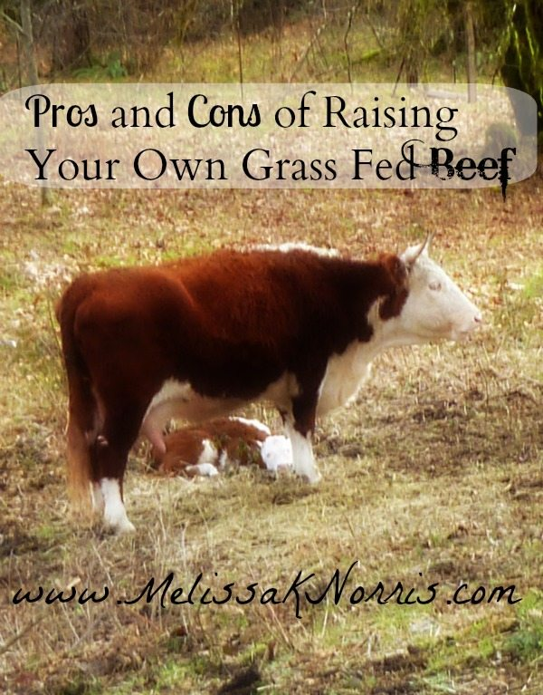Pros And Cons Of Raising Your Own Grass Fed Beef