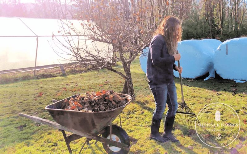 A woman raking around a fruit tree with a wheelbarrow full of debris and leaves.