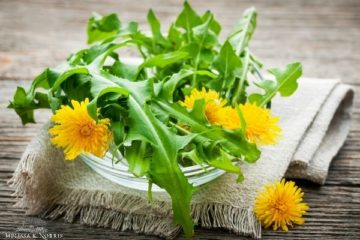 """Pinterest pin containing three images. Top image is of fresh picked dandelions resting on a white napkin sitting on a whitewashed table. Bottom left image is fresh chickweed placed on a wooden table with a wood bowl in the background. Bottom right image is a steaming cup of tea in a white teacup placed on a white saucer, and garnished with fresh nettle leaves. Text overlay says """"Edible and Medicinal Common Weeds in Your Backyard. How to Harvest, Cook, & Preserve""""."""