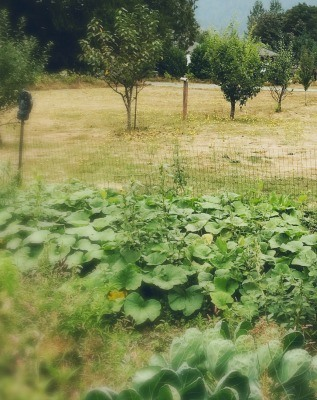 """Picture of a vegetable garden with orchard trees in the background.. Text overlay says """"Our Biggest Homesteading Mistakes and How to Avoid Them. Confessionf of a 5th Generation Homesteader""""."""