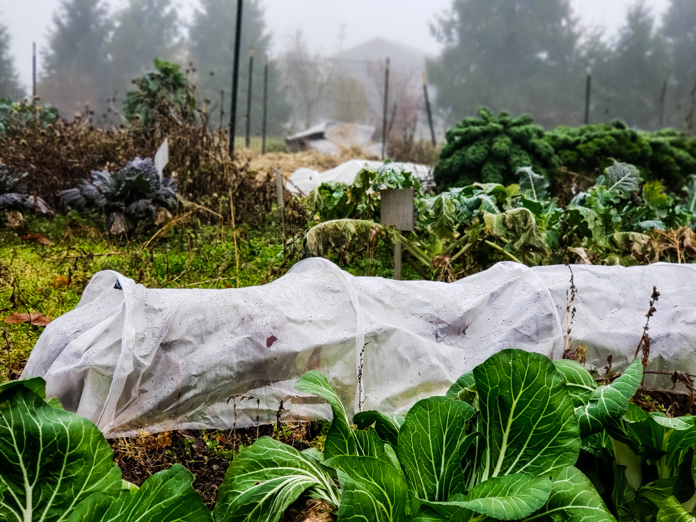 Fall vegetable garden with row covers.