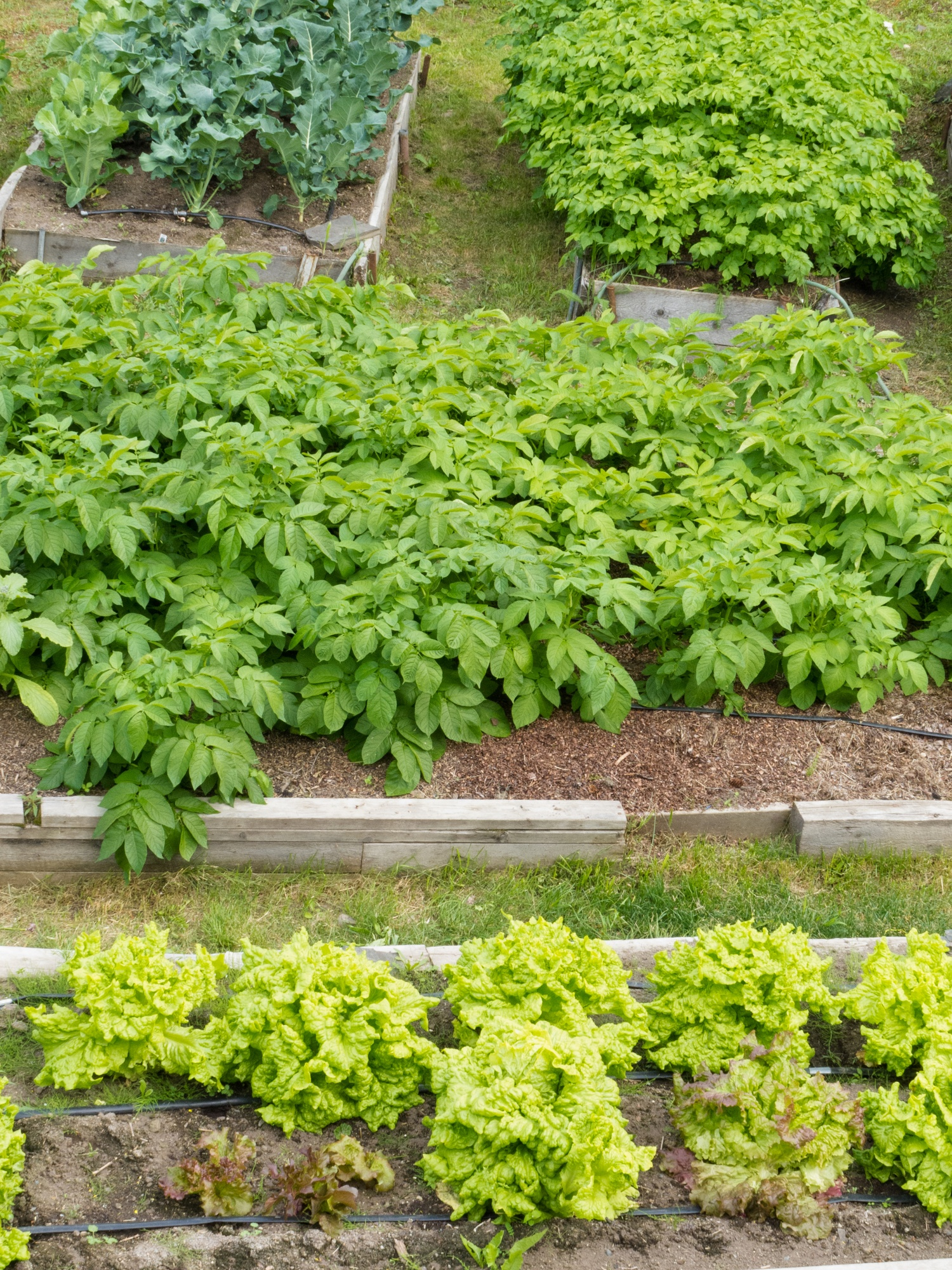 Raised Bed Gardening Tips 9 Things You Need To Know